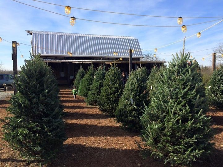 Christmas Trees Greensboro Nc